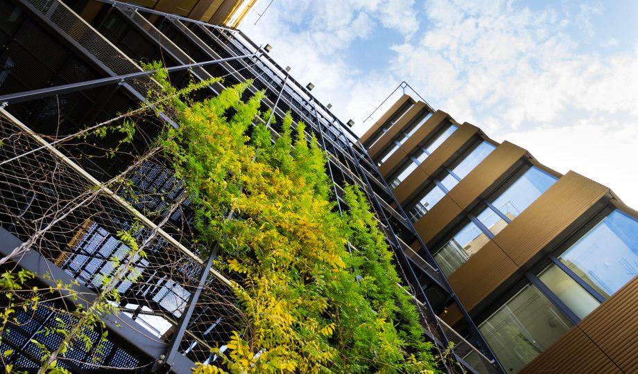 户外绿色生活墙上蔓生植物, 阳光灿烂的日子里,现代化办公大楼façade上的垂直花园, 低角度的观点, 复制空间=推进净零
