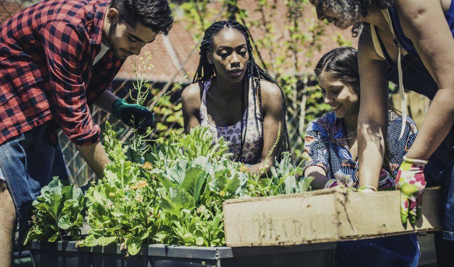 学习城市园艺的年轻人