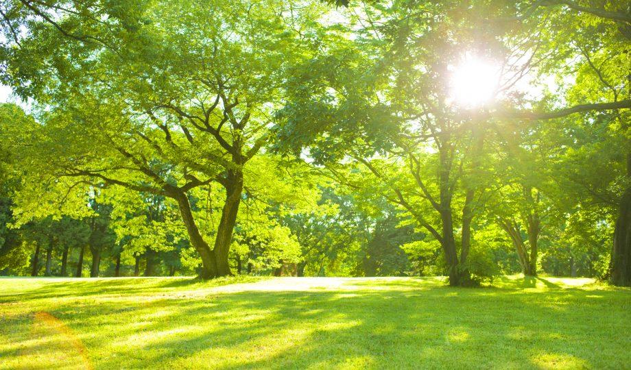 花园的阳光