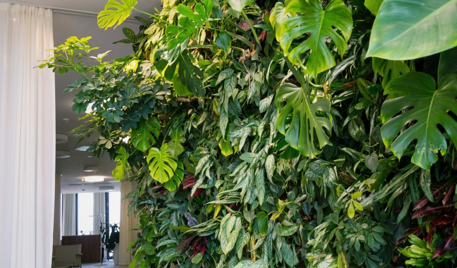 Living green wall with flowers and plants, vertical garden indoors