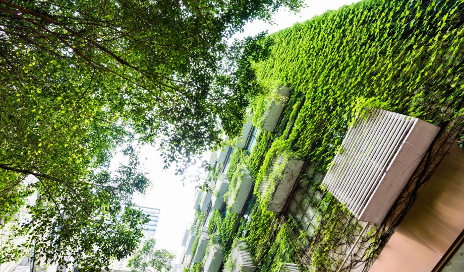 Green plants are growing on building walls